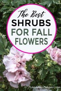 Fall blooming shrubs