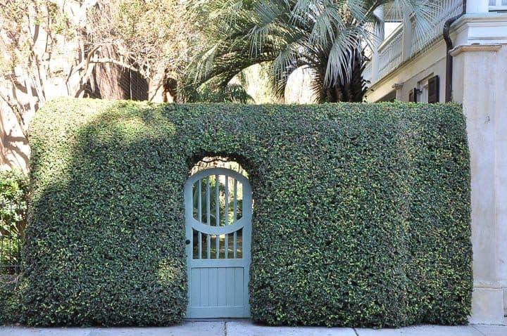 Wooden door as garden gate in hedge ©Waclaw Pakla - stock.adobe.com
