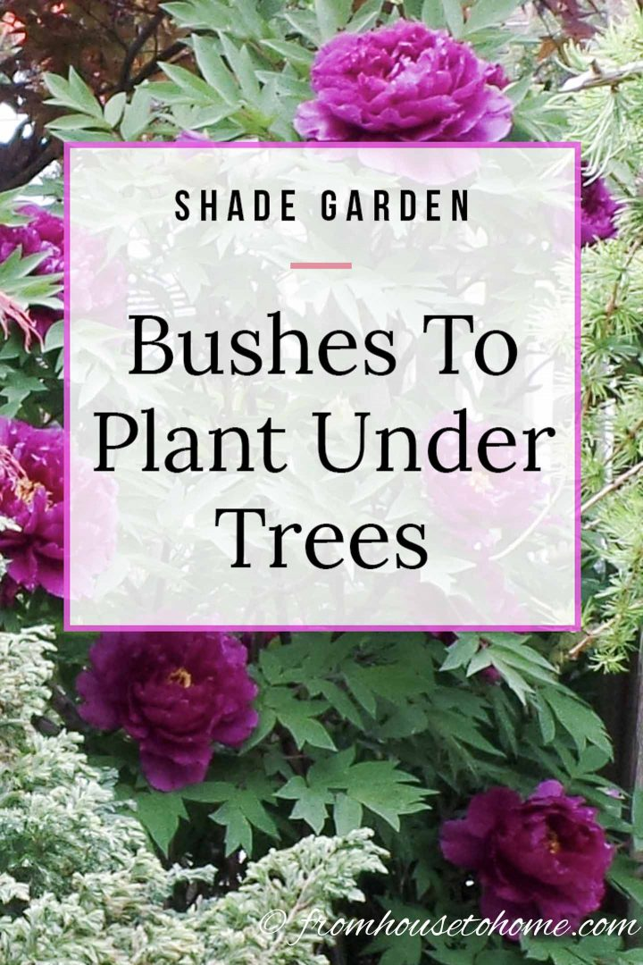 Shade Garden Bushes to plant under trees