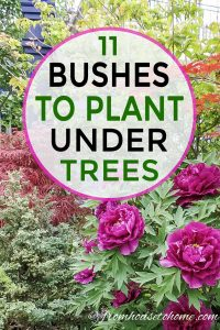 11 bushes to plant under trees