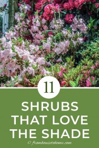 11 shrubs that love the shade