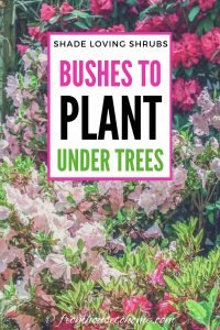 Shade loving shrubs: Bushes to plant under trees