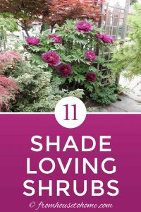 11 shade loving shrubs