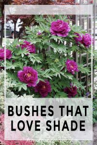 bushes that love shade