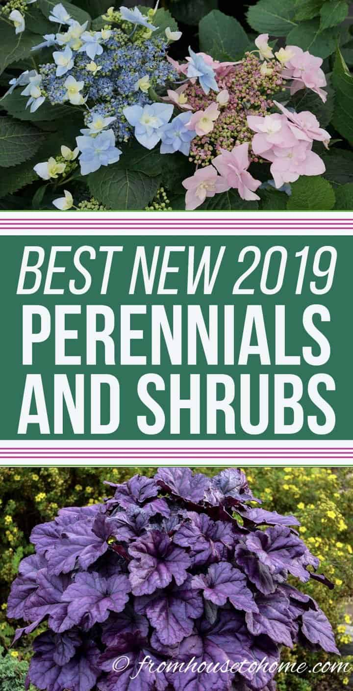 Best new 2019 perennials and shrubs