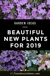 beautiful new plants for 2019