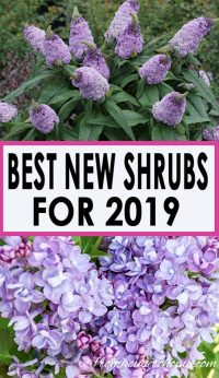 new 2019 shrubs