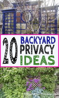 Backyard privacy ideas