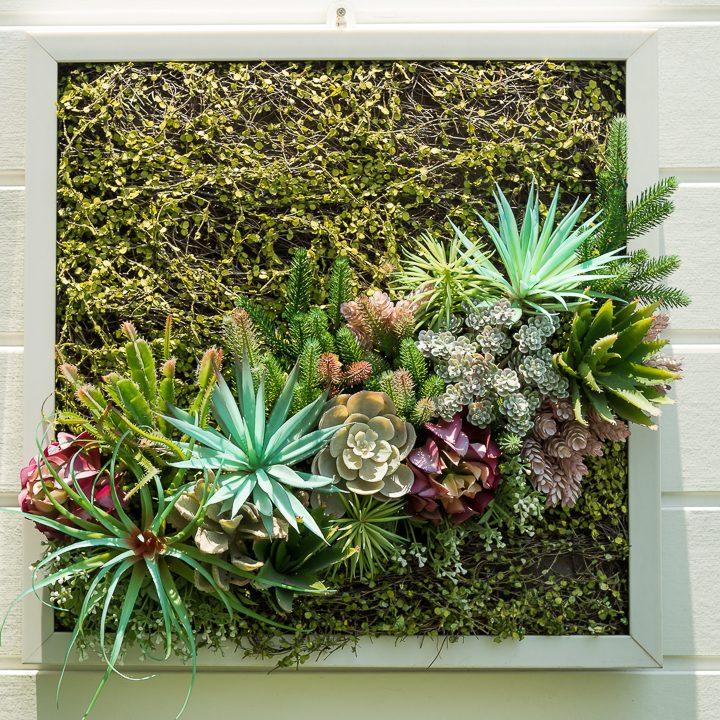 Succulents in a frame garden ©fotolismthai - stock.adobe.com