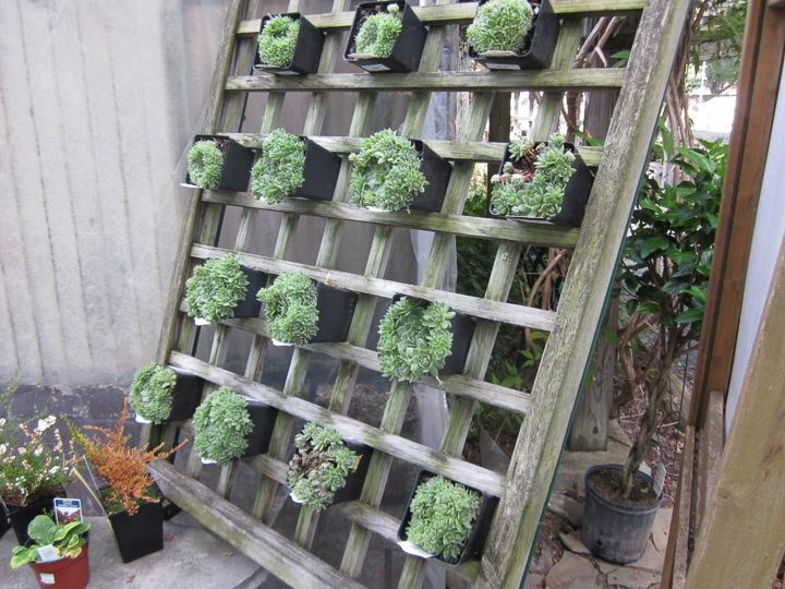 Lattice vertical succulent garden from diynetwork.com