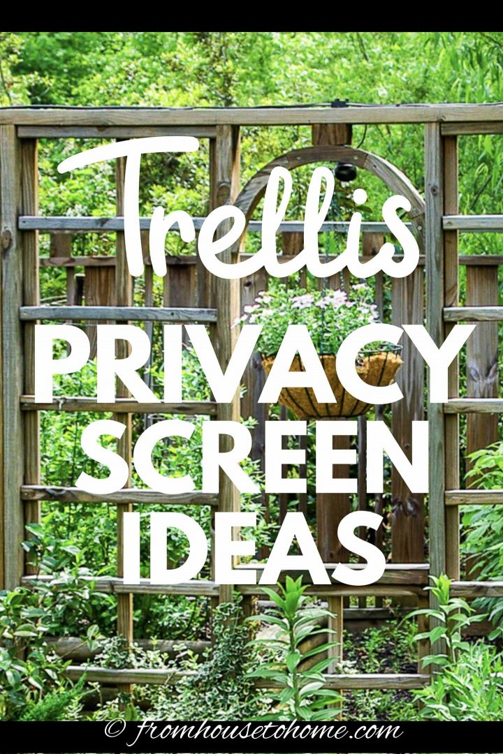 Trellis privacy screen ideas