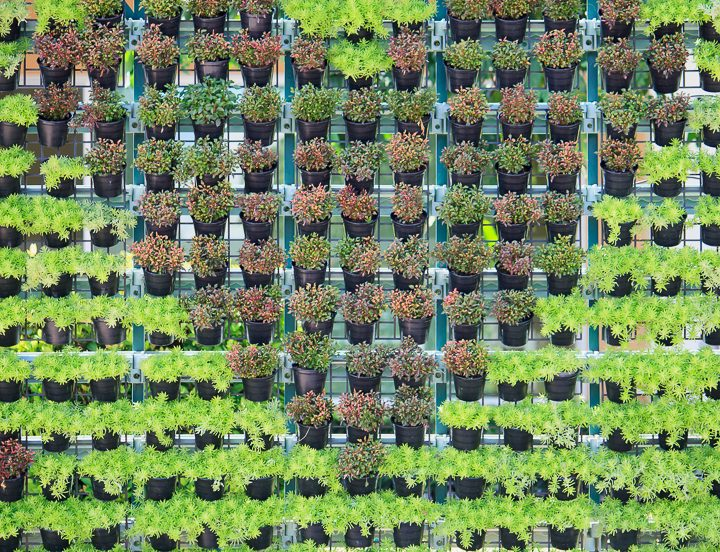 Lattice vertical garden wall withh plants making a heart shape ©Piman Khrutmuang - stock.adobe.com