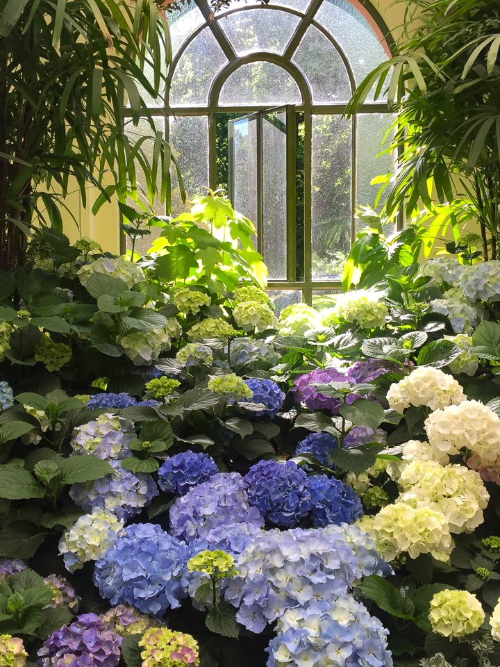 Blue and White Garden Design Ideas - Gardening @ From House ...