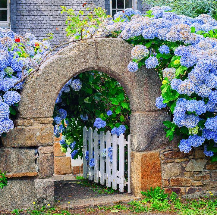 White gate with blue hydrangeas ©Boris Stroujko - stock.adobe.com