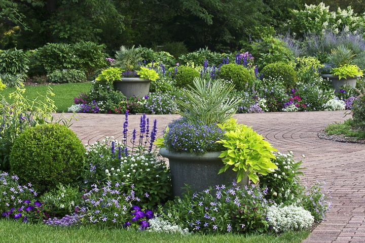 Blue and white flowers repeated in a garden border ©Maryna - stock.adobe.com