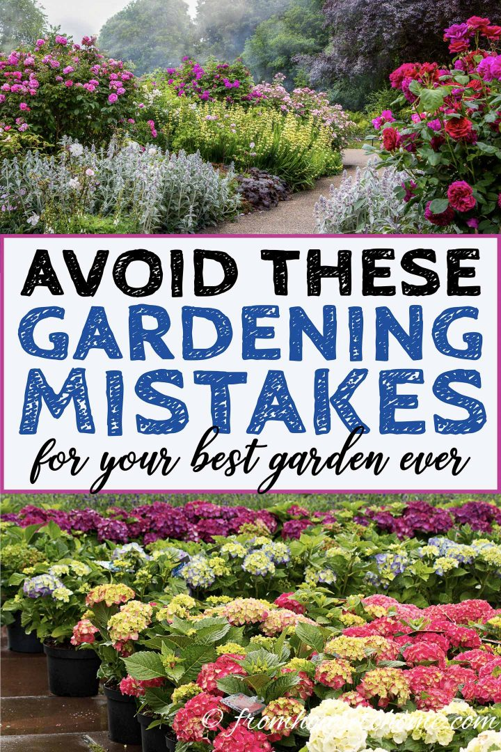 Avoid these gardening mistakes for your best garden ever