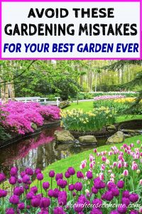 gardening mistakes to avoid