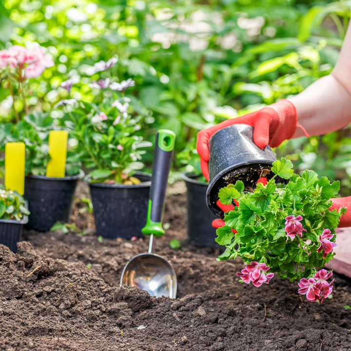 10 Landscape Mistakes To Avoid When Decorating Your Backyard: Avoid These 10 Landscaping Mistakes For Your Best Garden