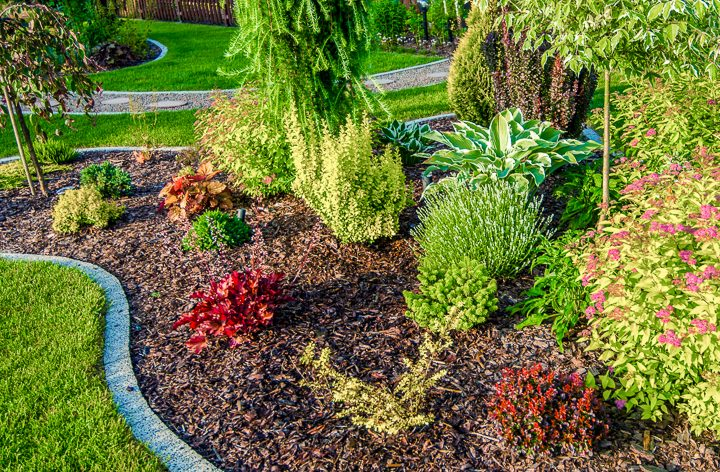 Newly planted garden with evergreens and hostas ©Tomasz Zajda - stock.adobe.com