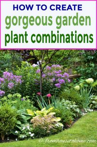 how to create gorgeous garden plant combinations with color