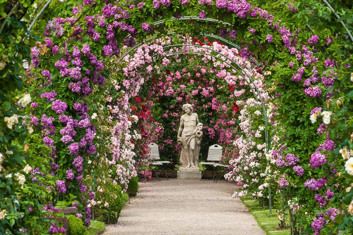 Monochromatic pink garden color scheme with roses of different colors on round arbors ©Jürgen Wackenhut - stock.adobe.com