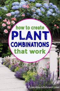 How to create plant combinations that work