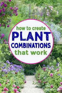 tips for creating plant combinations that work