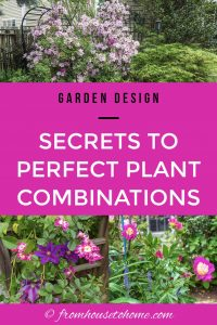 Secrets to perfect plant combinations
