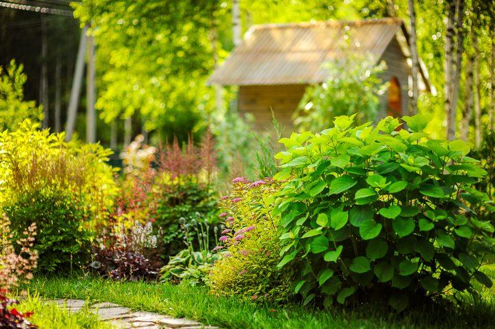 Astilbe, Coral Bells, Hosta, Spirea and Hydrangeas in a garden border ©mashiki - stock.adobe.com