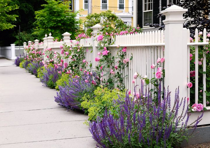 White picket fence with purple salvia and pink roses ©jStock - stock.adobe.com