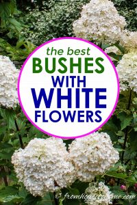 the best bushes with white flowers