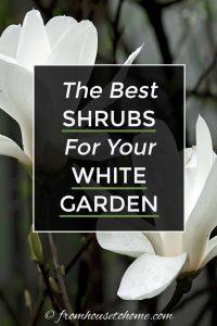 The best shrubs for a white garden