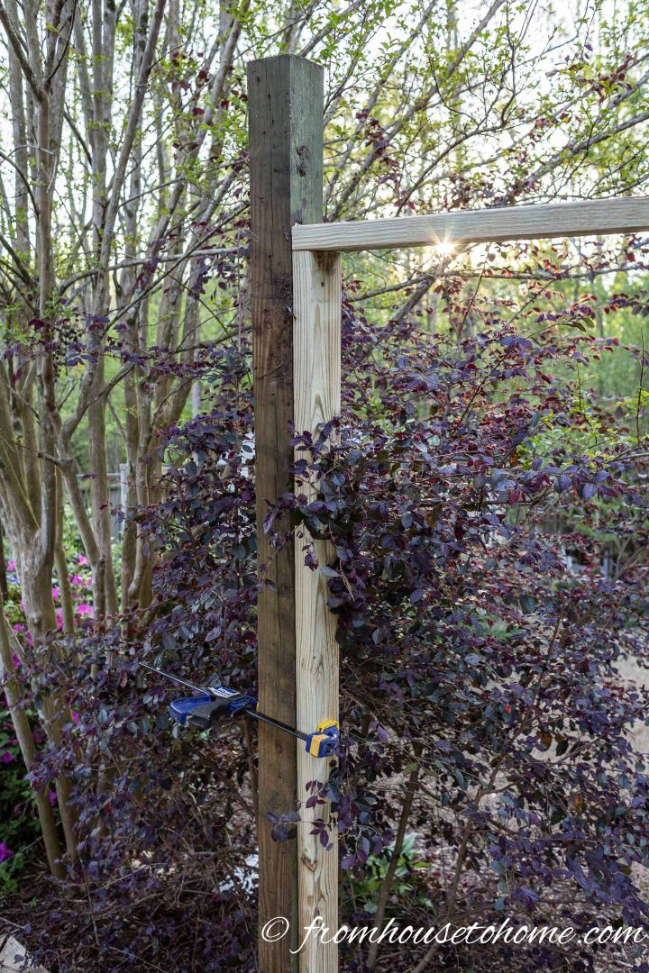 The DIY garden privacy screen frame secured to the post with a clamp