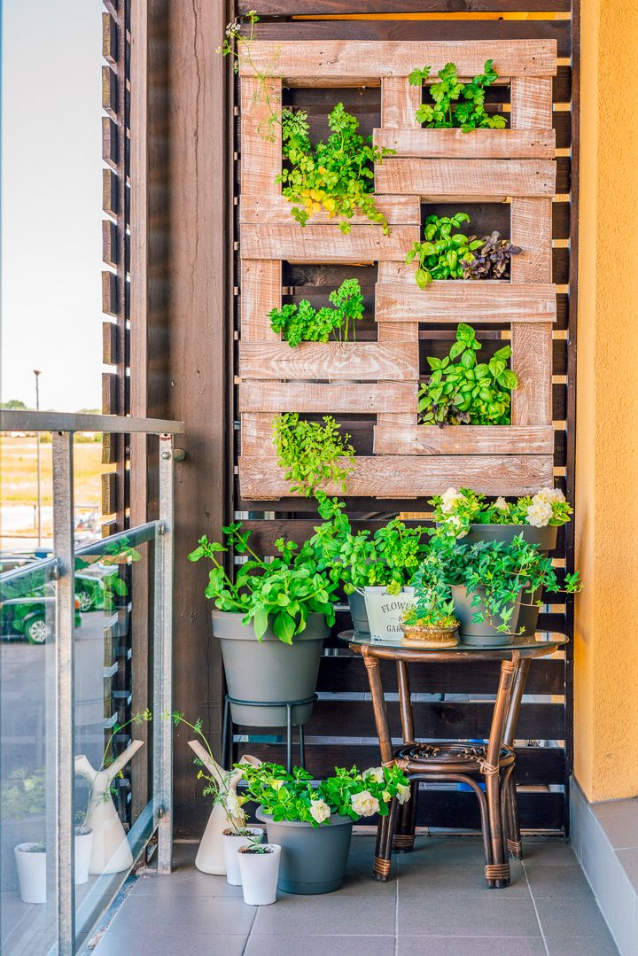 Vertical herb garden pallet ©ingusk - stock.adobe.com