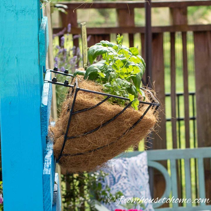 Window box herb garden hanging on a turquoise pallet