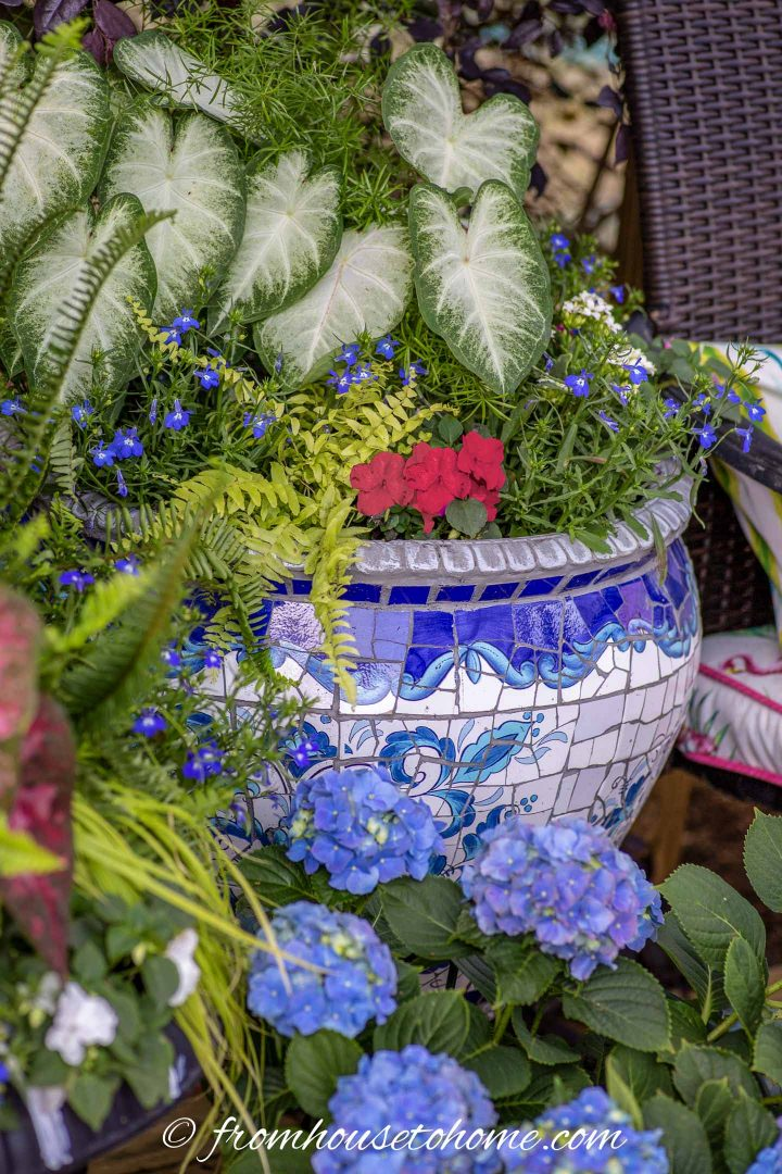 Patriotic red, white and blue container for shade with Caladiums, lobelia and impatiens