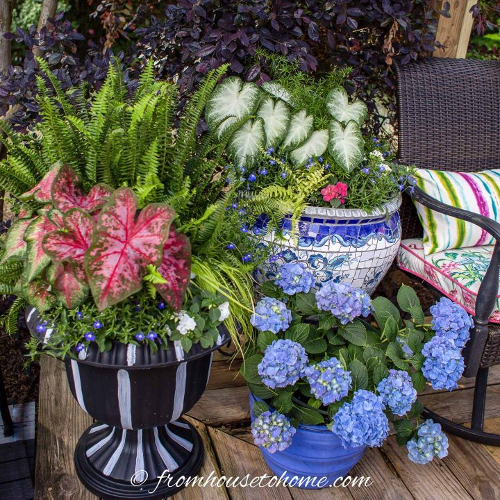 Patriotic flower combinations for the shade