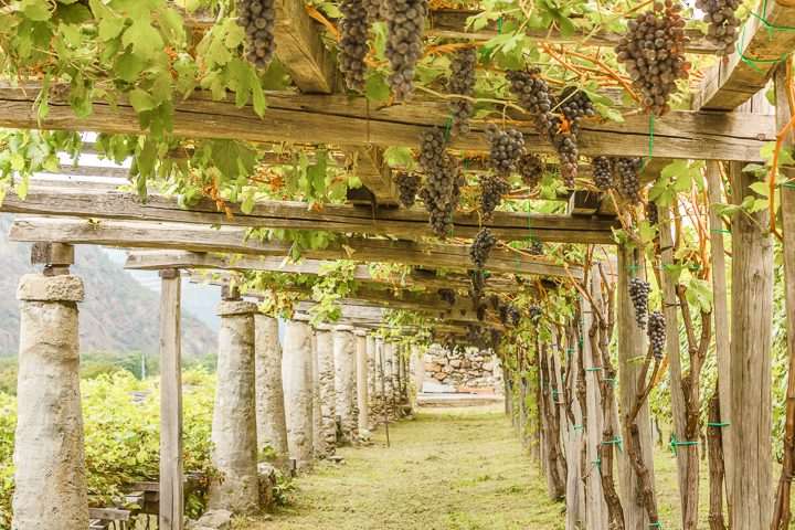Grapes growing over a wood and stone pergola ©bellissima - stock.adobe.com