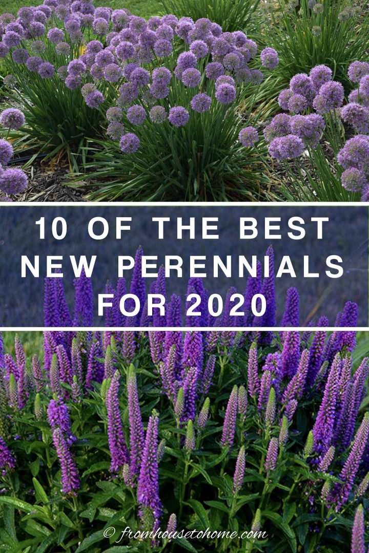new 2020 perennials