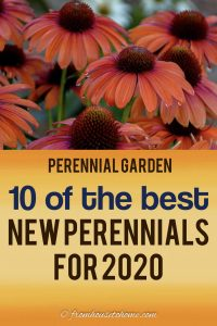 new perennials for 2020