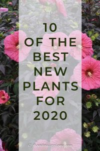 best new plants for 2020