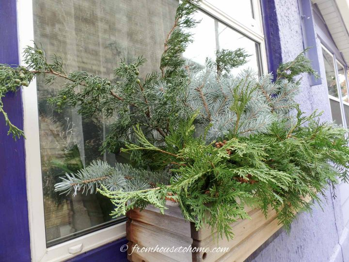 A window box filled with cedar, juniper and blue spruce branches