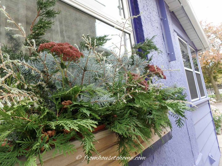 A winter window box filled with evergreens and dried flowers