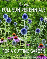 The best full sun perennials for a summer cutting garden