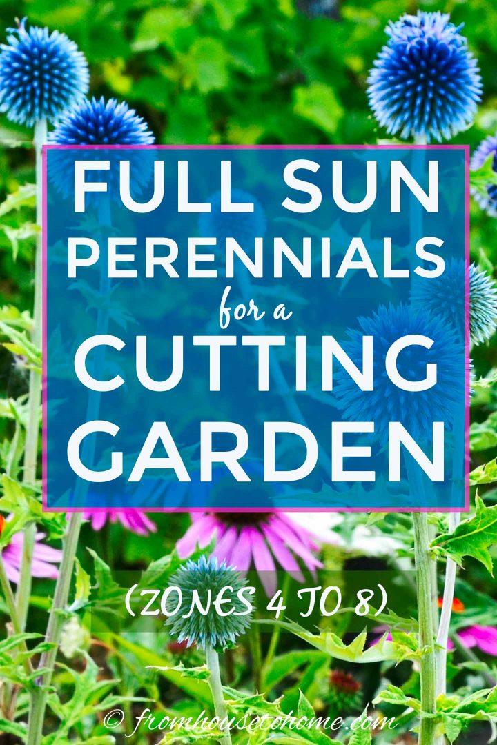 Full sun perennials for a summer cutting garden