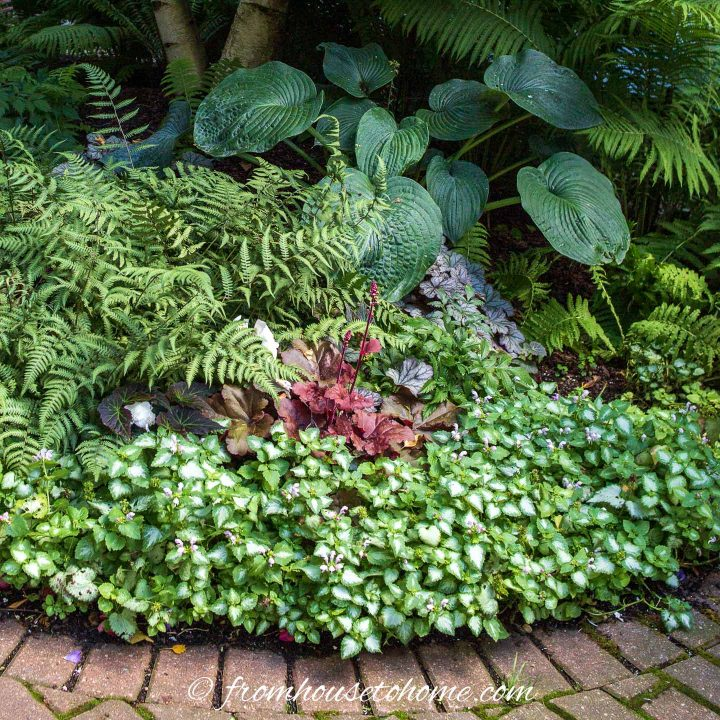 Ferns, Hostas, Coral Bells and Lamium in a small shade garden bed at the front of the house