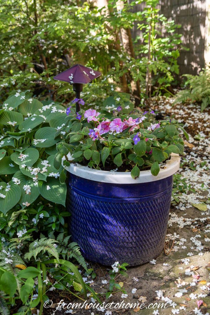 Impatiens planted in a blue container located in a shade garden