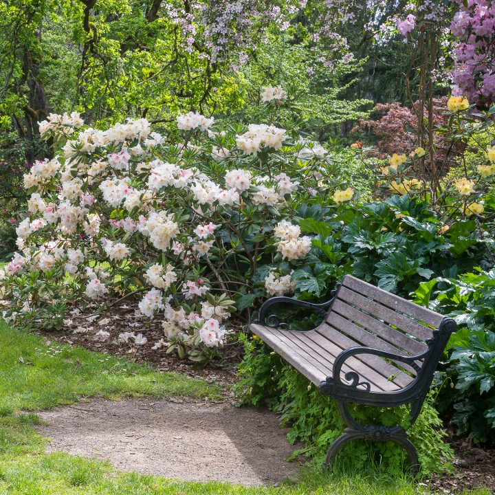 Bench in a garden surrounded by blooming Rhododendrons ©Jamie Hooper - stock.adobe.com