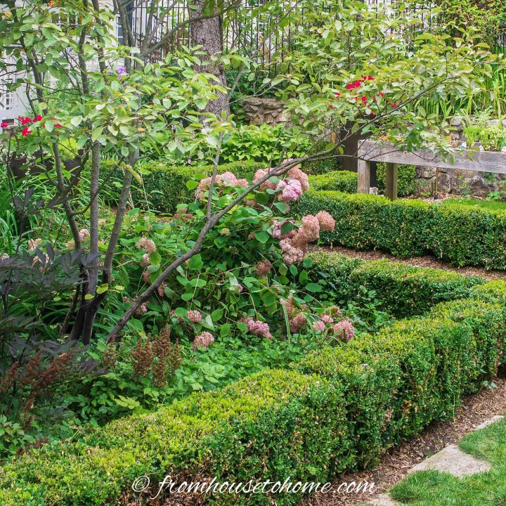 Formal shade garden with square garden beds edged in boxwood