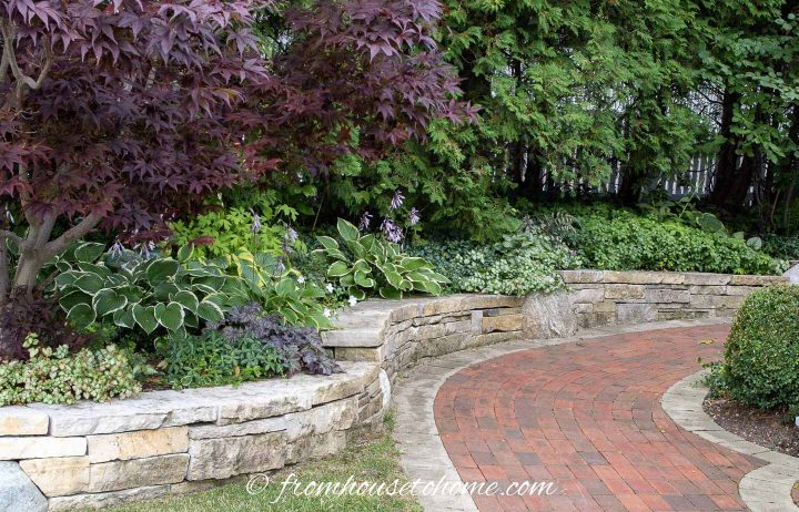 Shade garden design with Hostas and lots of ground cover perennials